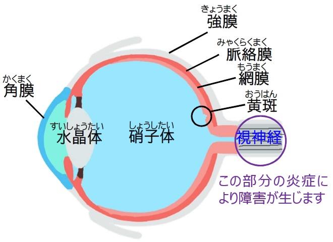 抗がん剤治療と眼の症状2